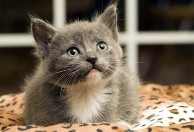 一人暮らし ペット おすすめ 猫